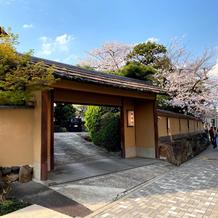 門横の桜の木