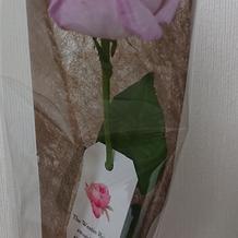 ウェスティンローズというバラを貰いました