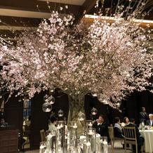 大好きな桜をな会場中央へ