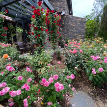 敷地内に咲いているバラ