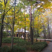 紅葉が綺麗なフォトスペース