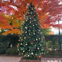 クリスマスシーズンでツリーがあります