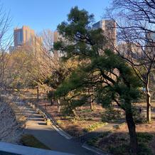 屋上からの公園です。