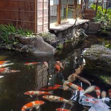 庭園の立派な錦鯉