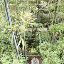 竹林が素敵です