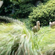 披露宴会場から見えるカモ