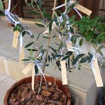 オリーブの木にはリボンとコメントを