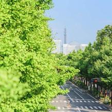 マリンタワーの近くの並木道