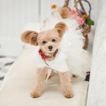 ペット用ドレス